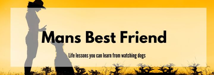 Mans Best Friend: Lessons You Can Learn From Watching Dogs